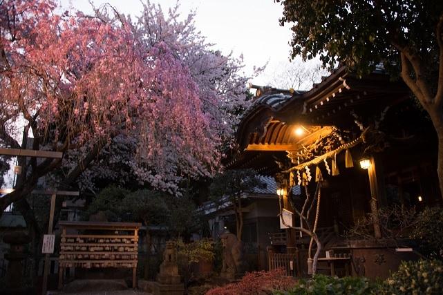11白山神社.jpg