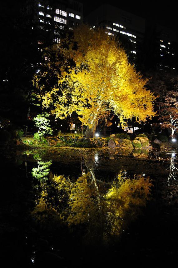 1日比谷公園紅葉ライトアップ.jpg