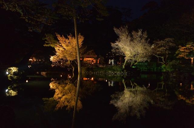 20兼六園の桜.jpg